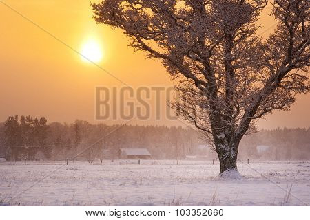 onely tree in snowfall in early morning