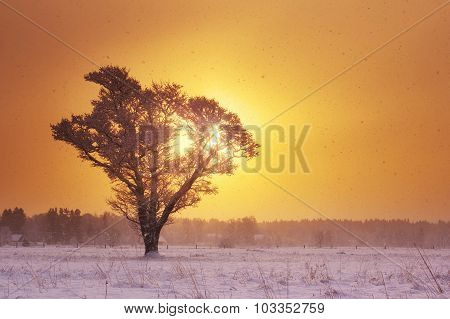 lonely tree in snowfall in the morning