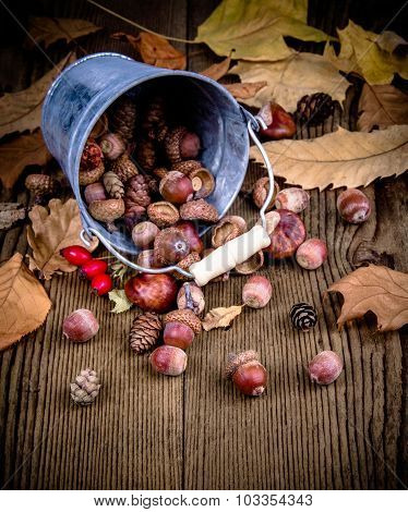 Scattered Rosehips, Acorns From Bucket