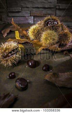Chestnuts in autumn
