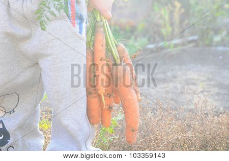 Child Holding Carrot Bunch
