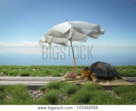 Small green turtle on the beach. Tourism concept vacation background