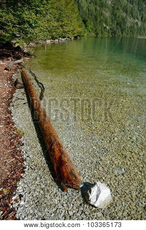 Withered Tree Trunk In Water On Shore Of Koenigssee Lake