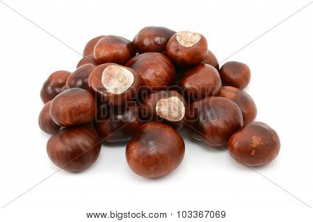Shiny Brown Conkers