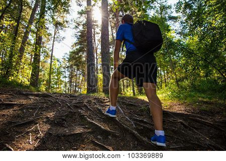 Back View Of Male Hiker With Backpack In Forest