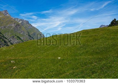 Green meadow in mountains, Gran Paradiso National park, Italy