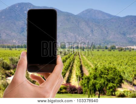 Hand holding mobile with black screen on winery background