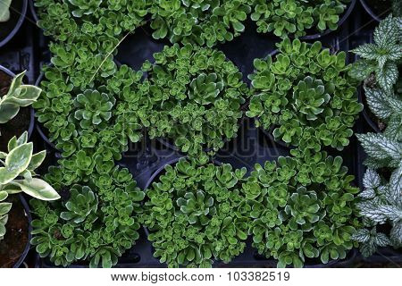 ZAGREB, CROATIA - MAY 30: Flowers exposed on Floraart, 49 international garden exhibition in Zagreb, Croatia, on May 30, 2014.