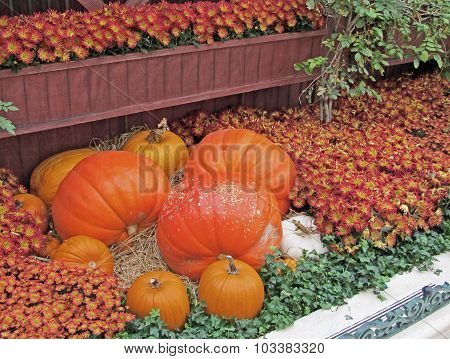 Pumpkins and Mums Make an Autumn Display