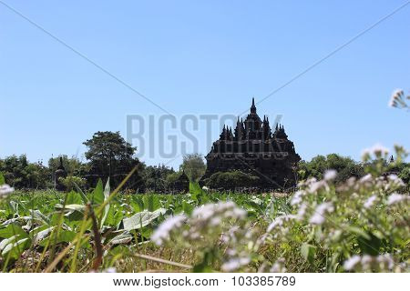 Budhism Temple And Statue in Jogja Indonesia