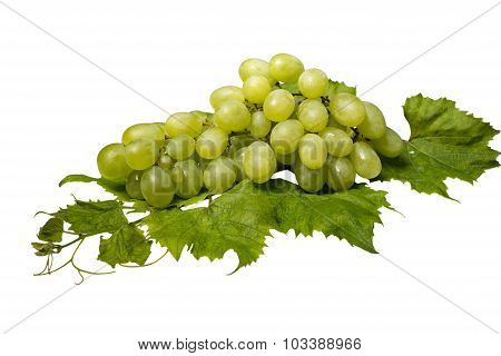 Bunch of green grapes and leaves on white background