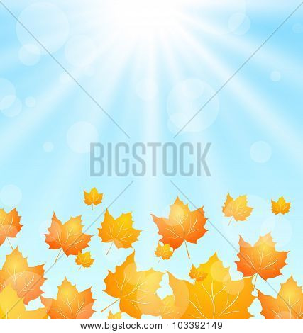 Autumn Flying Maples in Blue Sky