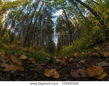 Fall Forest Floor Shows Leaves And Trees