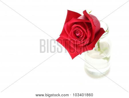 Red Rose Flower In Glass Vase Isolated On White Background