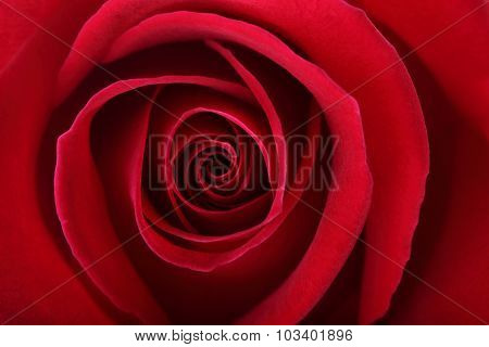 Red Rose Flower Background