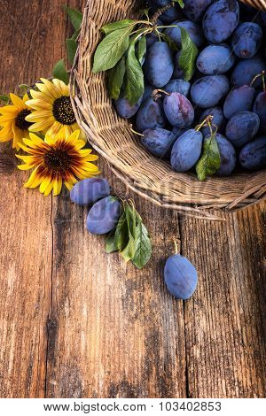 Basket Full Of Plums With Sunflower