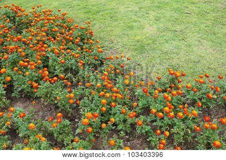 Orange Flowers In Green Grass Garden