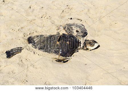 Dead Tortoise