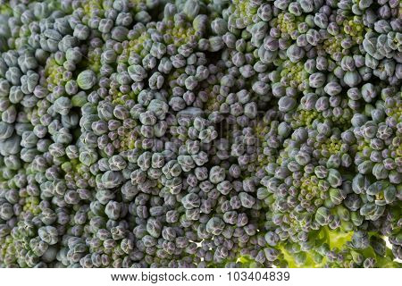Green Broccoli Organic Vegetable, Close Up Image