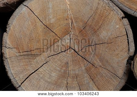Wood Logs Texture Of Aged Annual Rings