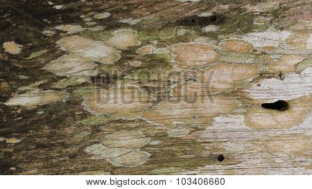 Grunge Of Wood Rustic Barn Plank Texture Background