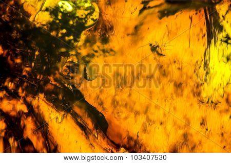 Amber Background