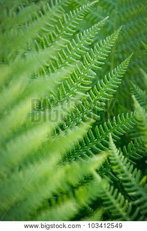 Close-up View Of Ferns In The Forest