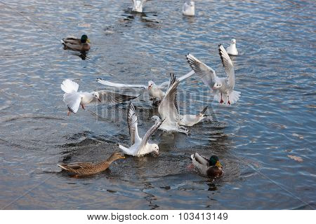 Two Flocks