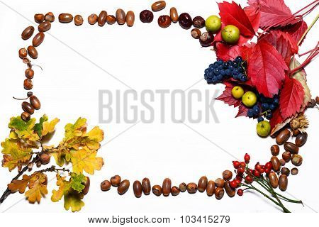 Autumn Leaves And Acorns Over White Background. Free Space For Your Text.