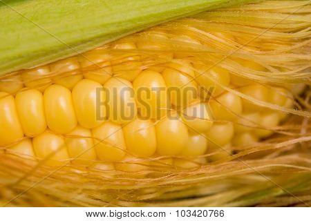 Closeup Sweet Corn Cob In Peel