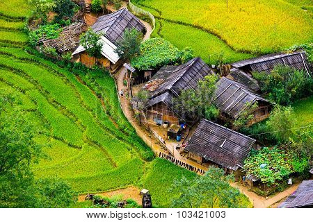 Terraced rice field in rice season in Sapa, Vietnam