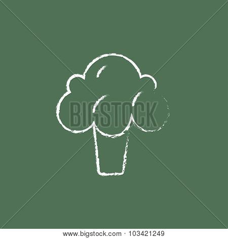 Broccoli hand drawn in chalk on a blackboard vector white icon isolated on a green background.