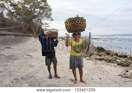 Indonesian Woman Carries On Head Basket With Seaweed