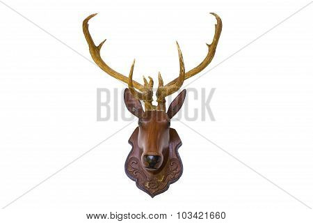 Head Deer Isolated With  Background