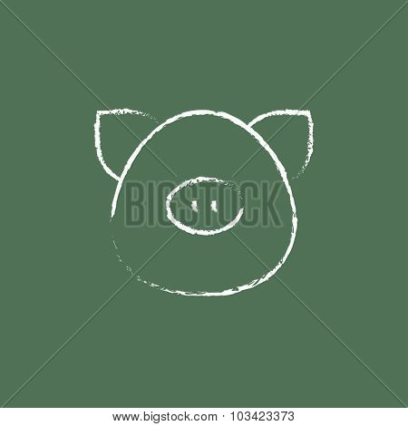 Pig head hand drawn in chalk on a blackboard vector white icon isolated on a green background.