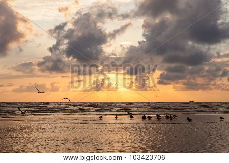 Ducks And Seagulls At Dramatic Sunset With Heavy Clouds On Baltic.