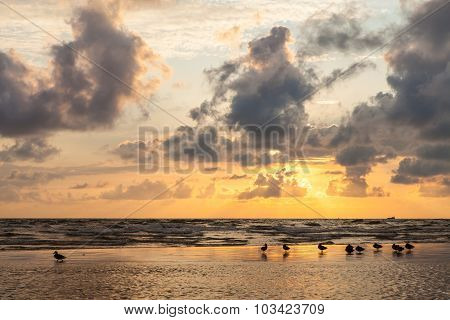Wild Ducks At Sunset On The Sand Bank Of Baltic