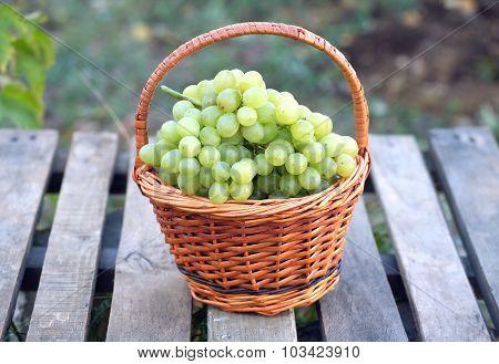 Grape in brown wicker basket on wooden table closeup