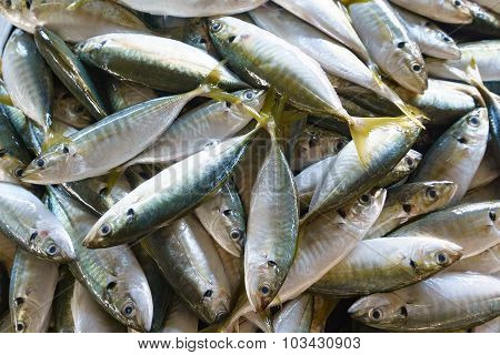 Fresh Fish On Market Display..