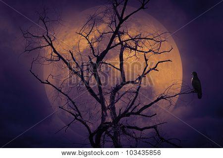 Bird Sitting On Dead Tree, Halloween Background
