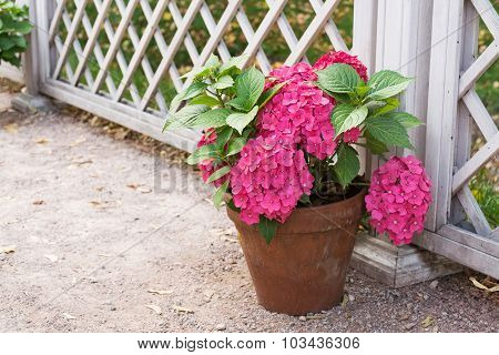 Flower In A Pot On A Background Of The Fence