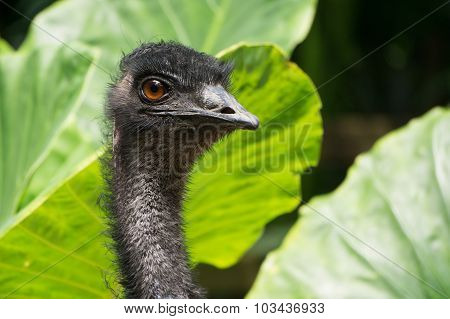 Close-up Portrait Of Ostrich Head With Green Nature Background.