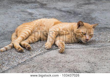 homeless orange cat on the floor