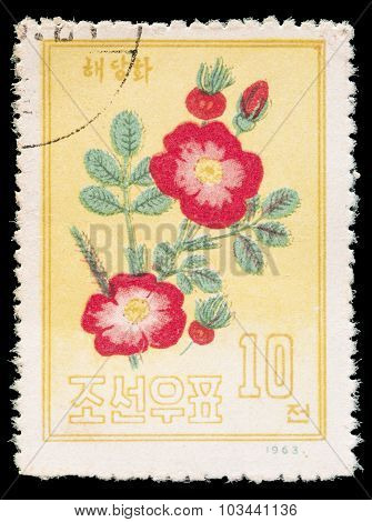 Postage Stamp Printed In North Korea Shows A Chinese Peony