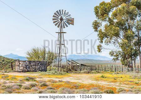 Windmill, Dam And A Kraal