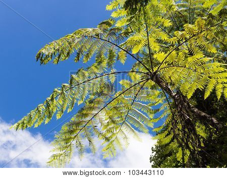 Giant  Green  Fern Leaves  In The Jungle