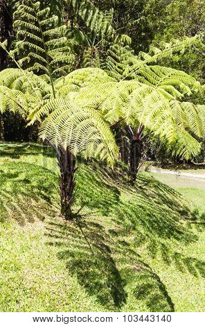 Giant  Fern Leaves With Shadows  In The Jungle