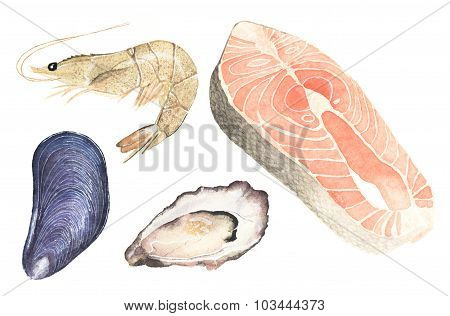 Seafood. Set of watercolor oyster, mussel, salmon steak and sea prawn on the white background.