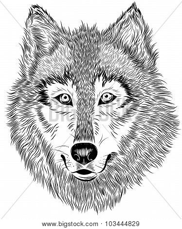 Vector hand drawn black and white portrait of furry wolf on white background. Animal detailed sketch