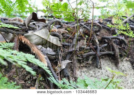 Fern, Branch And Plant Growing On Trunk